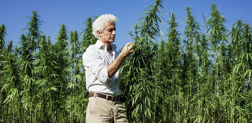 cannabis-business-owner