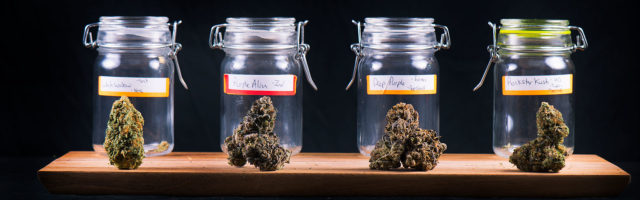 Cover Cannabis Cargo Page Banner - Cannabis Buds in Jars