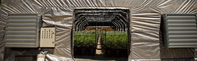 Cover Cannabis Property Page Banner - Cannabis Nursery