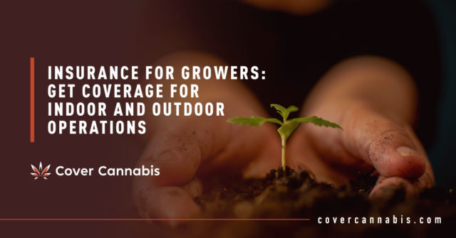 Hand Holding Cannabis Plant - Banner Image for Insurance for Growers: Get Coverage for Indoor and Outdoor Operations Blog