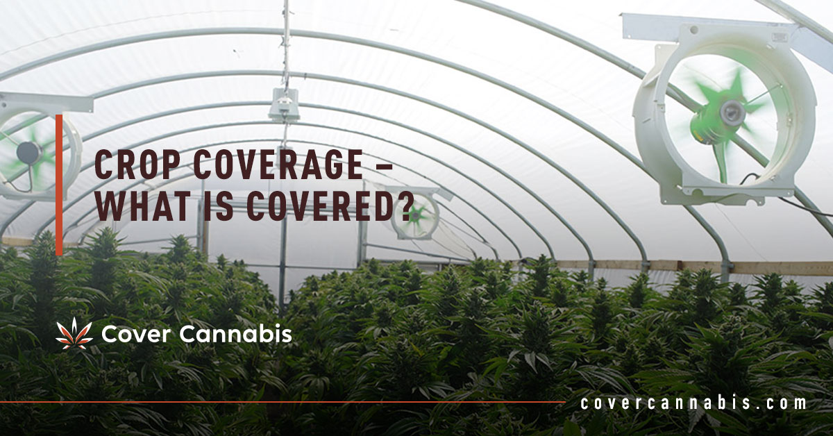 Cannabis Greenhouse - Banner Image for Crop Coverage – What is Covered Blog