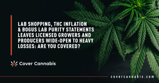 Green Cannabis Leaves - Banner Image for Lab Shopping, THC Inflation & Bogus Lab Purity Statements Leaves Licensed Growers and Producers Wide-Open to Heavy Losses Are You Covered Blog