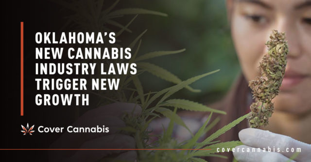 Man Holding Cannabis Leaf - Banner Image for Oklahoma's New Cannabis Industry Laws Trigger New Growth Blog
