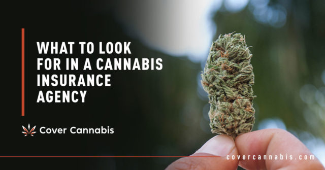 Cannabis Bud - Banner Image for What to Look for in a Cannabis Insurance Agency Blog
