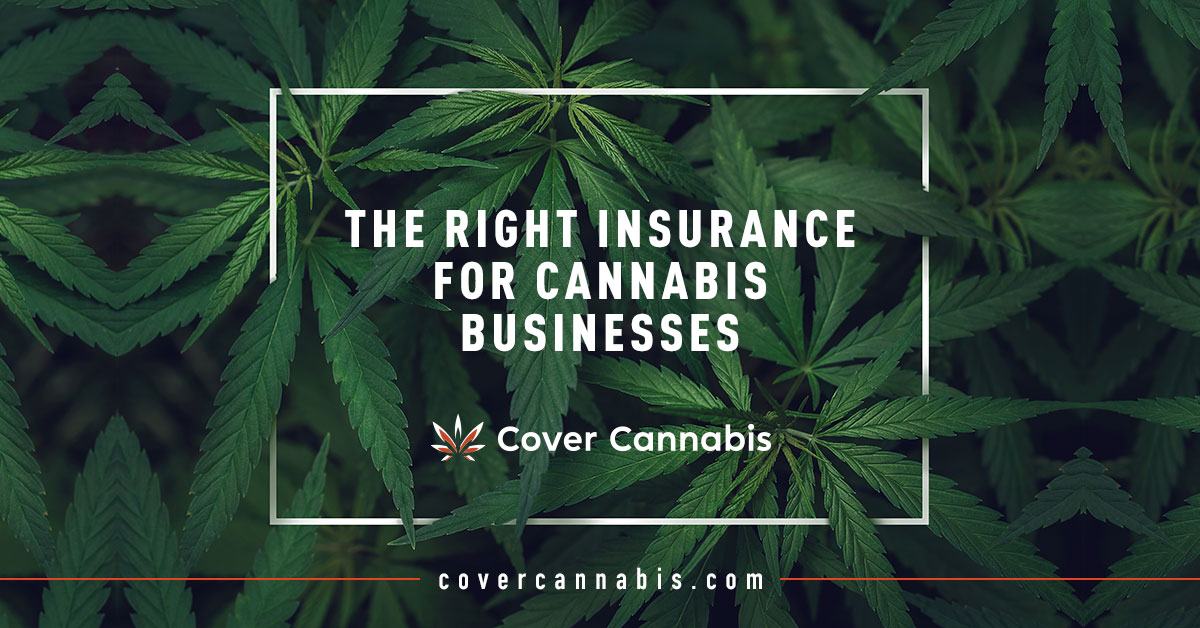 Cannabis Leaves with Blog Title - Banner Image for The Right Insurance for Cannabis Businesses Blog