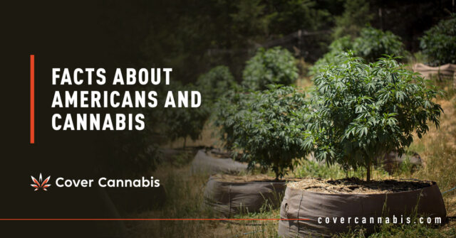 Cannabis Plants on Pot - Banner Image for Facts About Americans and Cannabis Blog